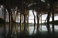 Spain, Cala S'Alguer, Costa Brava, trees reflecting in water at dusk - DSGF01821
