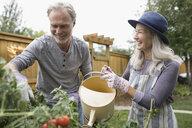 Senior couple gardening, watering vegetable plants in garden - HEROF20122