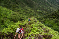 Hikers walking in rainforest, Moanalua Valley Trail, Oahu, Hawaii - ISF20500