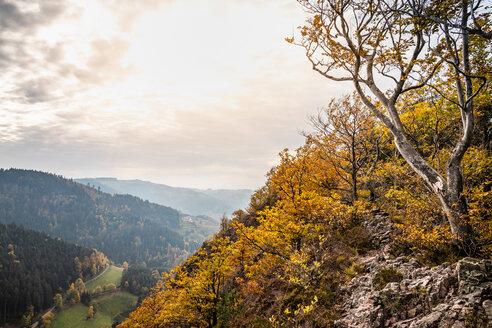 View from Karlsruher Grat (ridge) , black forest, Ottenhofen im Schwarzwald, Baden-Wurttemberg - CUF48791