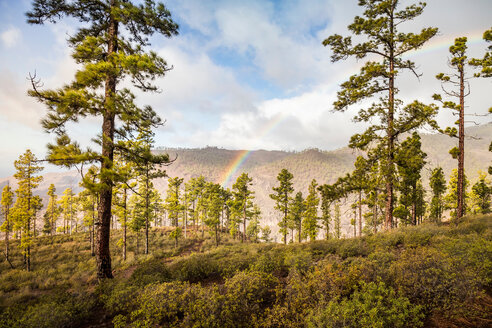 Rainbow over forest landscape, Mogan, Canary Islands, Spain - CUF48815