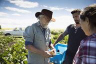 Farmers examining and harvesting vegetables on sunny farm - HEROF20708