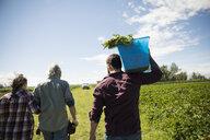 Farmers harvesting vegetables on sunny farm - HEROF20711