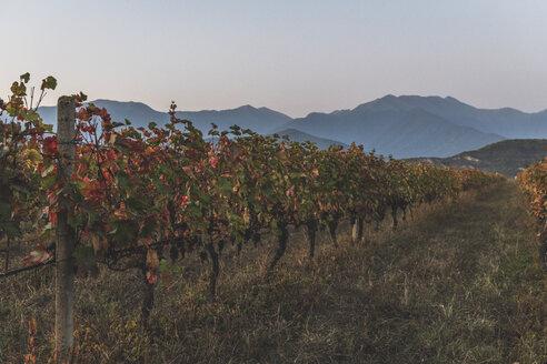 Georgien, Kachetien, Weinfelder - KEBF01151