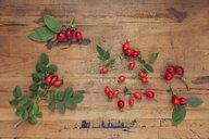Roseships on wood - GWF05867