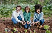 Family planting lettuce seedlings in vegetable garden, showing hands, full of soil - GEMF02699