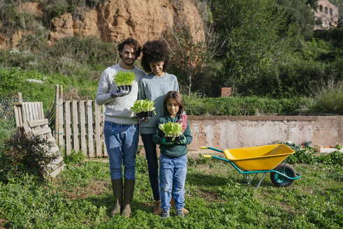 Happy family holding lettuce seedlings in a vegetable garden - GEMF02729