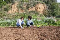 Couple planting lettuce seedlings in vegetable garden - GEMF02735
