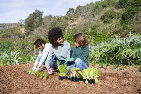 Family planting lettuce seedlings in vegetable garden - GEMF02738