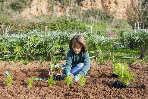 Boy planting lettuce seedlings in vegetable garden - GEMF02744