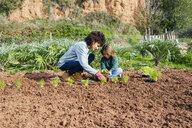 Mother and son planting lettuce seedlings in vegetable garden - GEMF02747