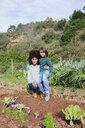 Mother and son planting lettuce seedlings in vegetable garden - GEMF02753