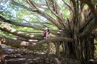 Woman exploring gigantic tree, Waipipi Trail, Maui, Hawaii - ISF20671