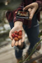 Teenage girl with camera phone photographing ripe, red harvested cherry tomatoes - HEROF21850