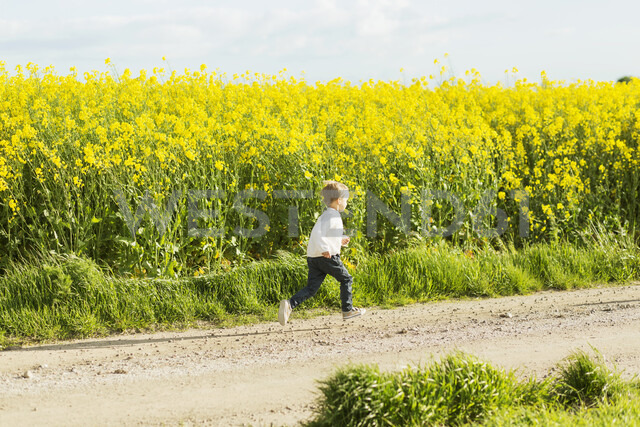Boy running on dirt road at rapeseed field - ASTF02818 - Astrakan Images/Westend61