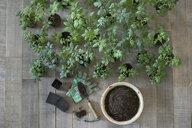 Knolling of seedlings and soil in flowerpot - HEROF22651