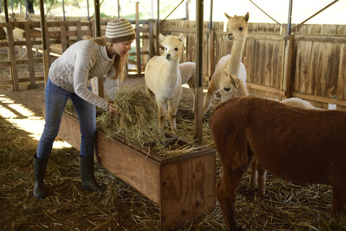 Mature woman working at alpaca stable - ECPF00511
