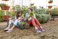 Latina sisters harvesting vegetables in garden - HEROF22901