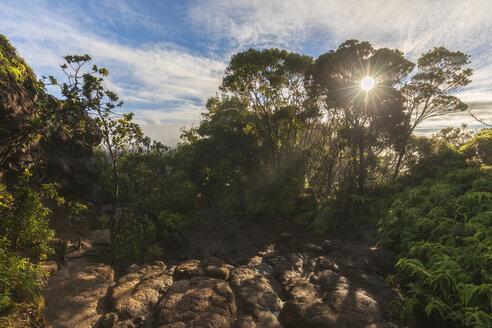 USA, Hawaii, Kauai, Koke'e State Park, Pihea Trail - FOF10385