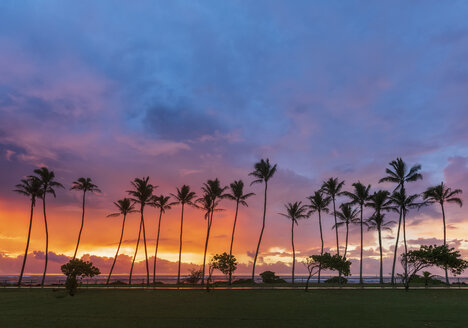 USA, Hawaii, Kauai, Pacific Ocean, Kapa'a Beach Park, palms at sunrise - FOF10415