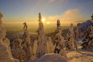 Germany, Bavaria, Bavarian Forest in winter, Great Arber, Arbermandl, snow-capped spruces at sunset - LBF02374