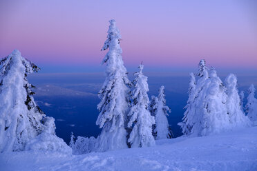 Germany, Bavaria, Bavarian Forest in winter, Great Arber, Arbermandl, snow-capped spruces at sunset - LBF02377