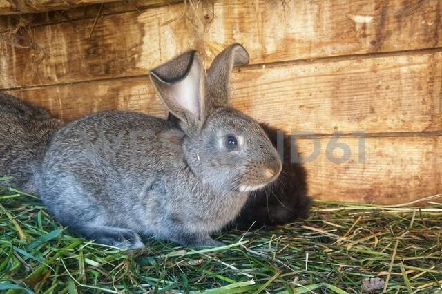 Rabbit, gras - NGF00500 - Nadine Ginzel/Westend61