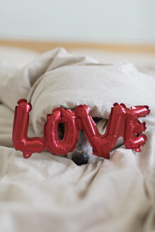 Dog on bed with love foil balloon, under blanket - JPF00351