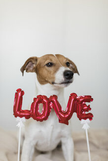 Dog with love - JPF00354