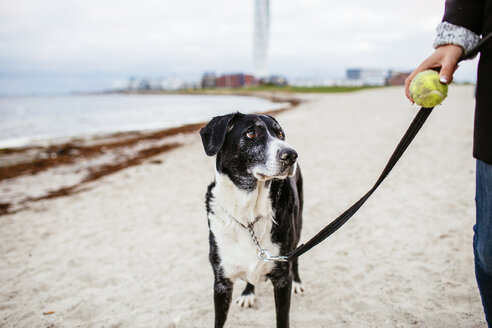 Dog looking at woman holding ball on beach - ASTF04459