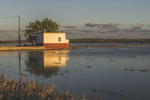 Spain, Ebro Delta, rice paddies at sunset - KEBF01173