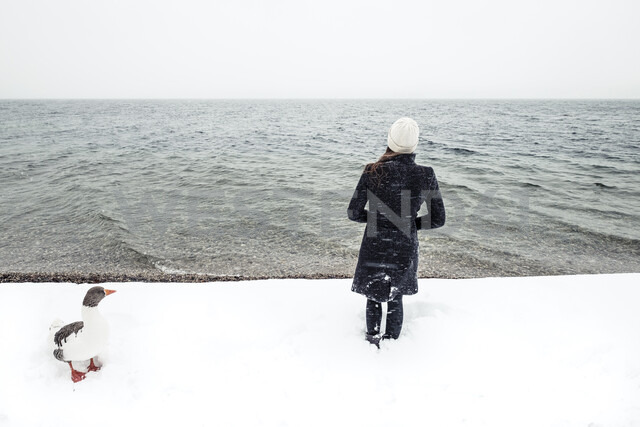 Grey goose and young woman at Lake Starnberg in winter - WFF00004 - Wilfried Feder/Westend61