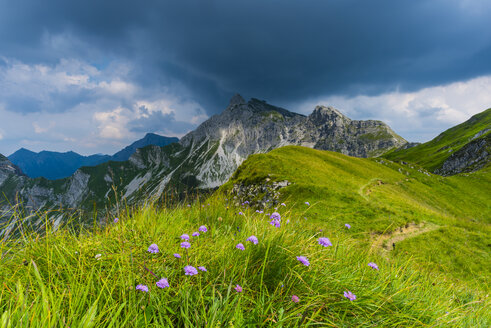 Germany, Bavaria, Allgaeu, Allgaeu Alps, Armeria alpina flowers - WGF01300