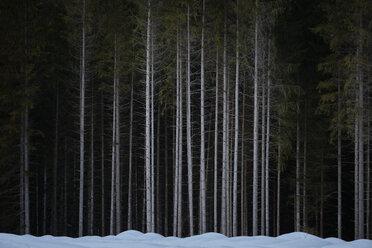 Germany, Bavaria, Kruen, Barmsee, forest - MRF01914