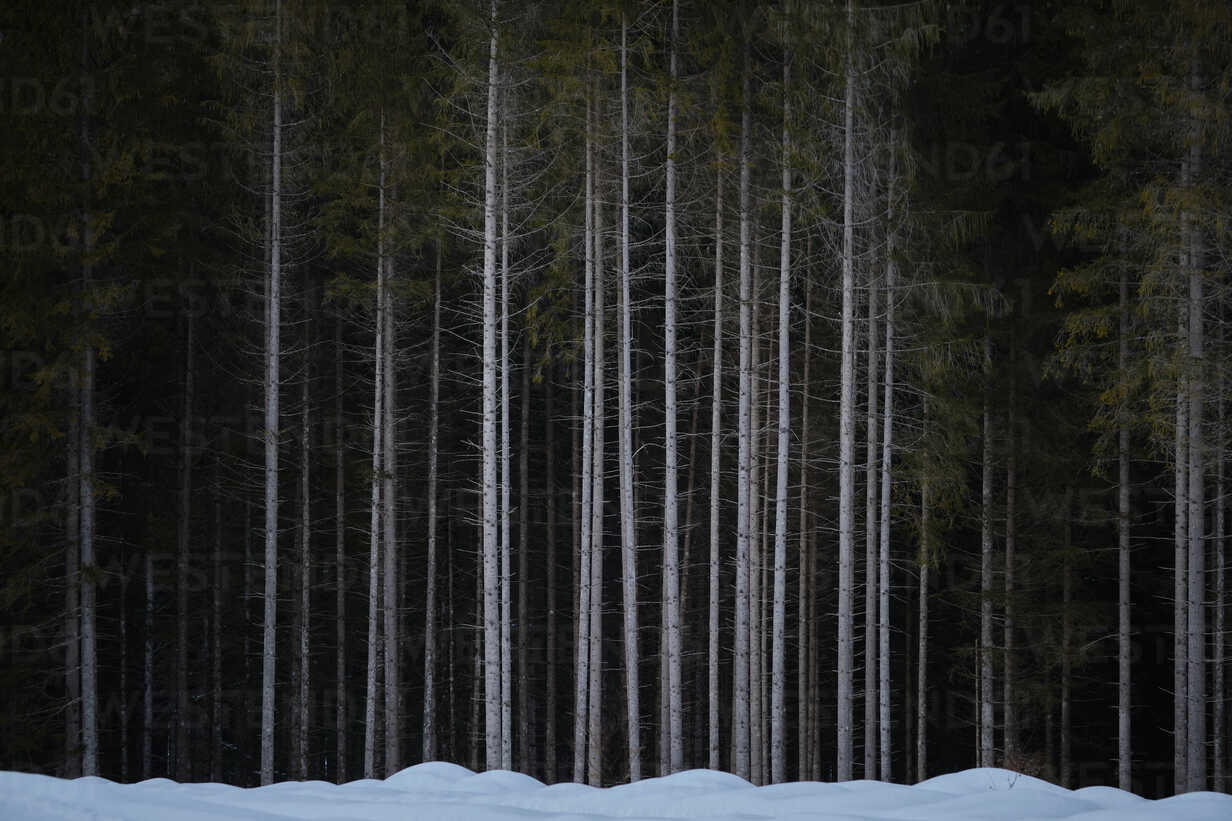 Germany, Bavaria, Kruen, Barmsee, forest - MRF01914 - Michael Reusse (alt)/Westend61