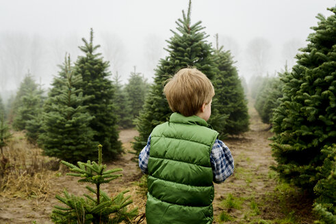 Rear view of baby boy standing on field at Christmas tree farm during foggy weather - CAVF60640