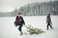 Boyfriend looking at girlfriend while pulling pine tree on snow covered field in forest - CAVF60733