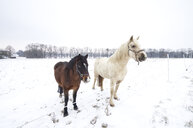 Germany, two horses standing at fence of corral in winter - ALE00105