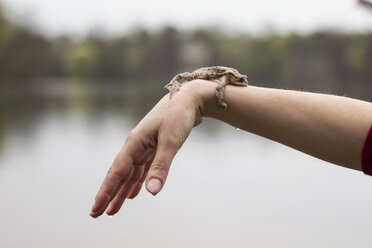 Close-up of European toad on woman's arm - MAMF00448