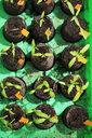 Tomato seedlings in mini greenhouse - CSF29320