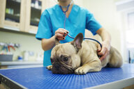 Female veterinarian examining dog with stethoscope in veterinary surgery - ABIF01209