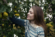Smiling woman picking lemons from tree while standing in yard - CAVF61325