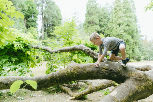 Side view of playful boy climbing on fallen tree in forest - CAVF61430