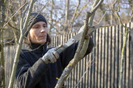 Pruning of tree with handsaw - NDF00860