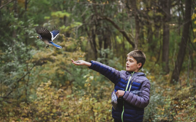Boy feeding blue Jay against trees in forest during autumn - CAVF61763