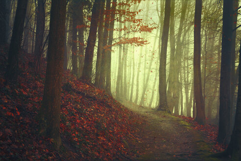Autumn forest and empty forest path - DWIF00984