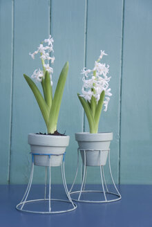 Easter decoration, hyacinth in flowerpot, diy lampshade - GISF00392