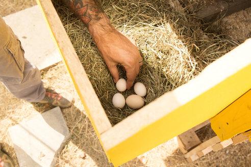 Deutschland, NRW, Garten, Huehnerstall, Huhn, Eier, Maennerhand greift nach Eiern im Nest - MFRF01234