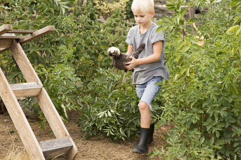 Boy holding Polish chicken in garden - MFRF01243