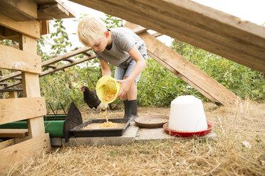 Boy feeding chicken at chickenhouse in garden - MFRF01249